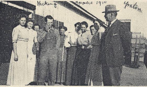 Packing Apples Graton Circa 1910